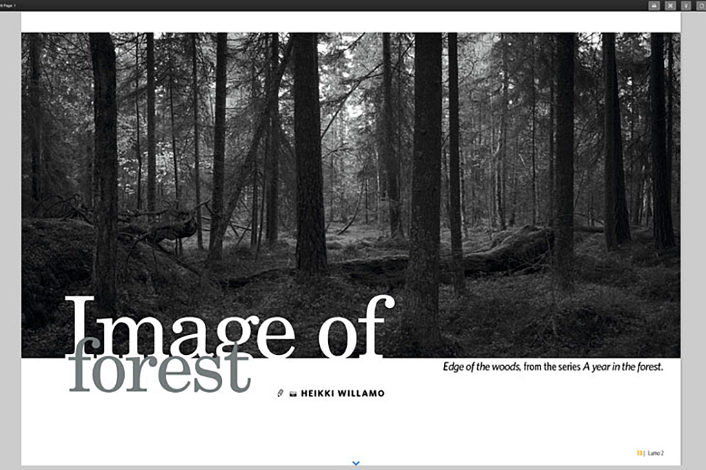 image-of-forest